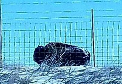 letourvoicesecho-nodapl-ocetioyate-buffalo