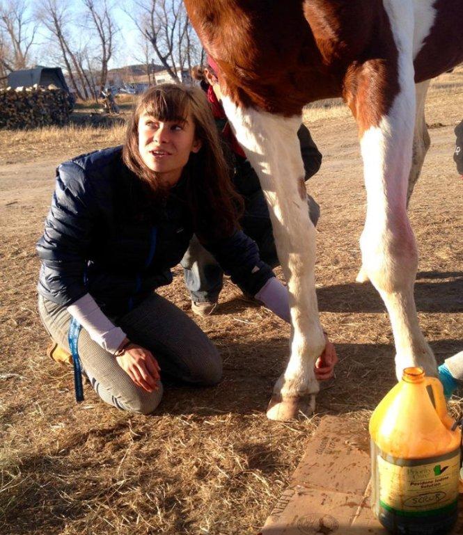 letourvoicesecho-nodapl-standingrock-veterinarian-11