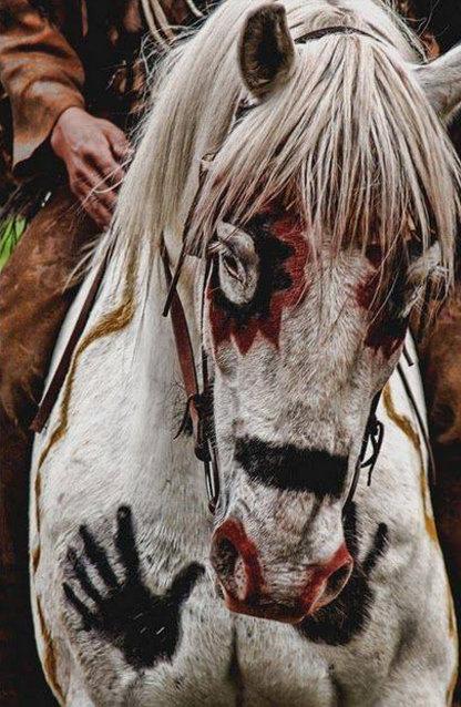 letourvoicesecho-nodapl-standingrock-warriorhorse