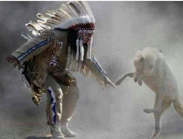 letourvoicesecho-nodapl-standingrock-wolf-indigenous
