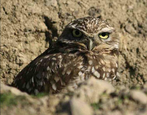 letourvoicesecho-ocetioyate-owl-standingrock