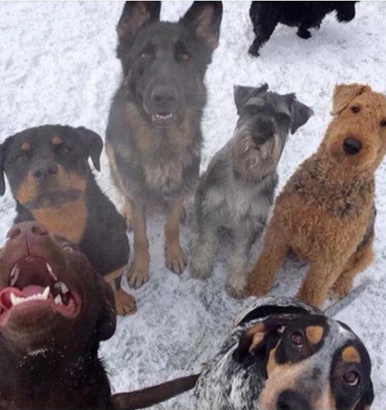 letourvoicesecho-standingrockdogs-indianholocaust-ocetisakowin